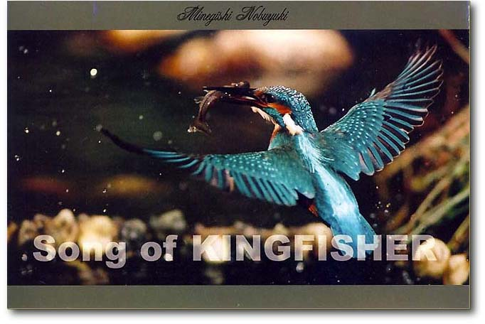 song of kingfisher